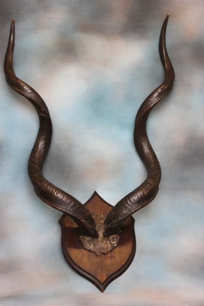 Pair of Kudhu Horns.